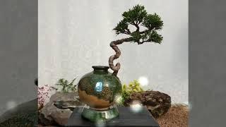 도자기랑 나무랑 탐방(2)