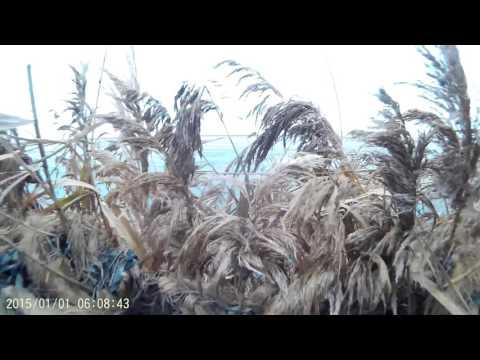 Утиная охота  Краснодарский край  Приморско Ахтарский р он  Декабрь 2016