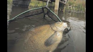 Рыбалка с Ночевкой на Дикой Реке. Лещ на Фидер и Закидушки. Лучшая Прикормка для Леща