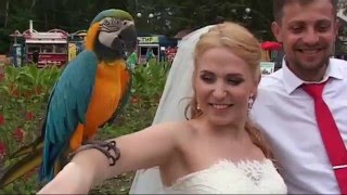 Красивая свадьба Дмитрия и Виктории. Фото-видеосъемка в Омске.Тел. 8-913-965-73-62