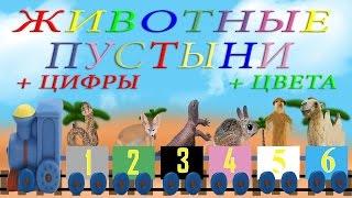 Животные пустыни, изучение цвета, изучение цифр. Развивающие мультики