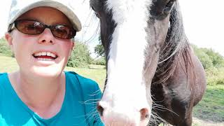 ATTACHMENT HORSEMANSHIP why natural healthy relationships matter