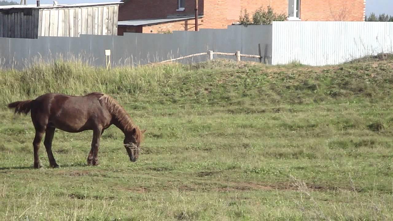Ютуб видеосекс быка с кобылой