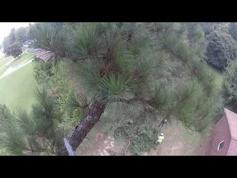 Tall Pine Tree Topping Near a House - Part 1