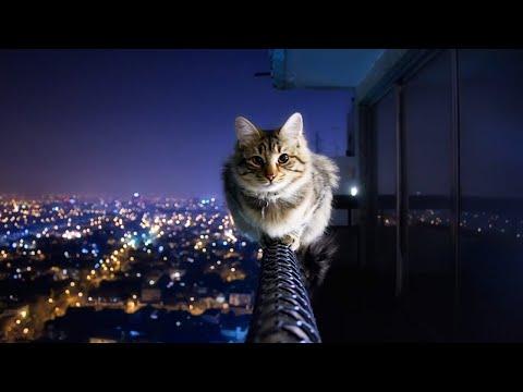 Katt som interagerar