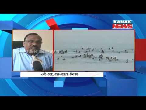 Migratory Birds Arrive Hirakud Dam, Locals Demand For Bird Sanctuary Declaration