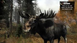 Big Game Hunter 2014 - Охота на лося #6