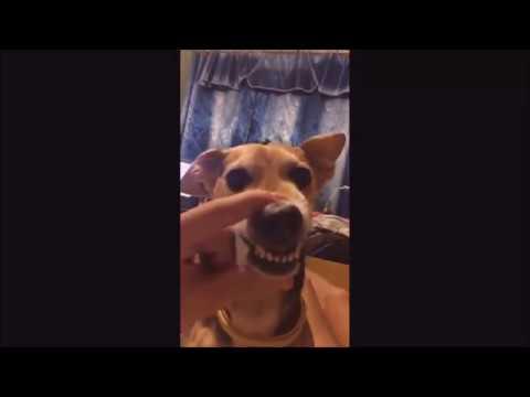 Funny dog -  La la la la la (Lorenzo Russo remix)