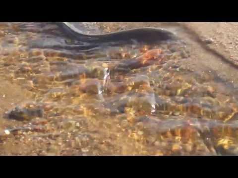 ловля угрей в финском заливе