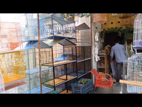 Visit Cage Shop Karimabad Karachi Video in Urdu/Hindi