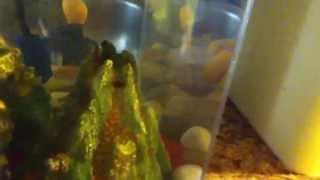 shark attack fish fun episode 1