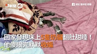 回家發現床上5隻奶貓翻肚甜睡!他傻眼完默默收編