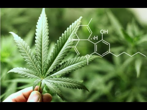 CBD AND THE FIGHT AGAINST ANXIETY