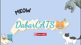 It's Playtime Again DabarCATS😸
