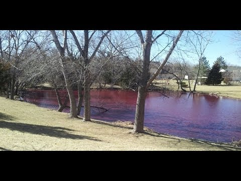 Signs of the Times : Mysterious phenomenon Pond in Wichita Kansas turns Blood Red (Feb 19, 2014)