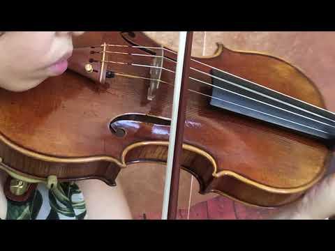 Ifstrings Master Build deluxe Wood #369 Guarneri del Gesu 1741