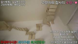 동탄 카페 고양이방 - 플레이캣 고양이 투명 놀이터 원…