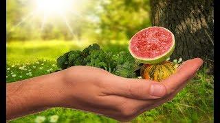 Que dá corpo comida humano ao sangue