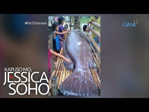 Kapuso Mo, Jessica Soho: Higanteng 'kugtong' sa Cebu, kumakain daw ng tao?!