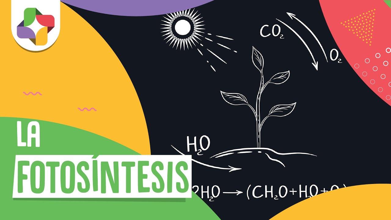 Fotosíntesis - Biología - Educatina - YouTube