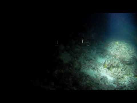 WildLife Marine seeking Corals (MALAYSIA)