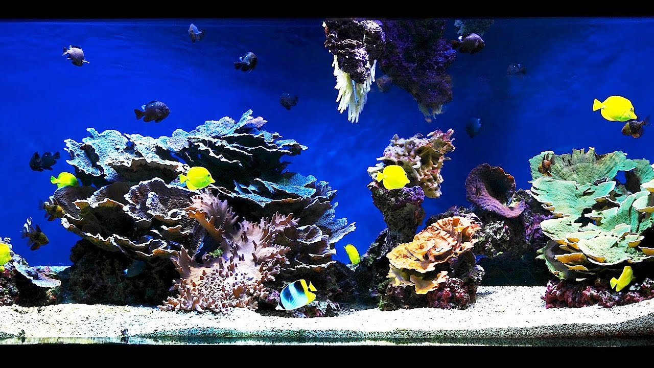 How to Aquascape a Saltwater Aquarium | Aquarium Care ...