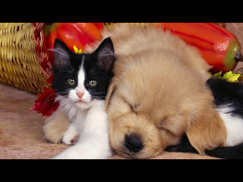 Pictures Of Cute Puppies And Kittens Together