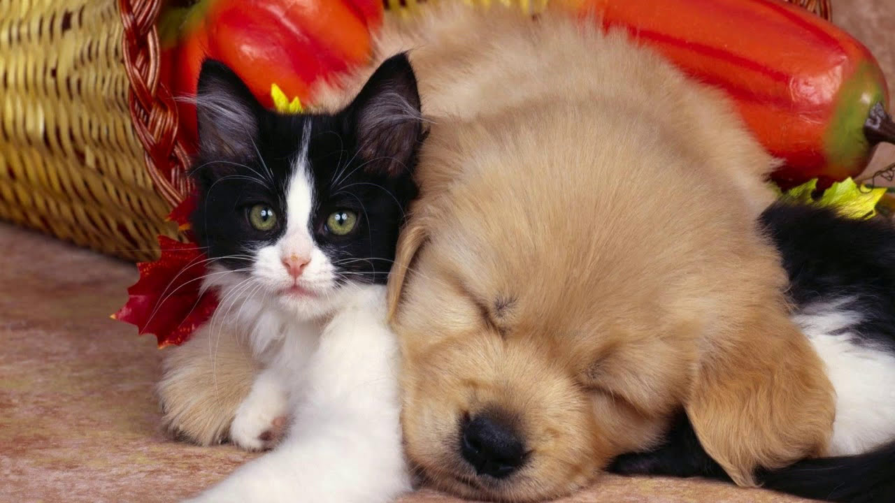 Pictures Of Cute Puppies And Kittens Together - YouTube