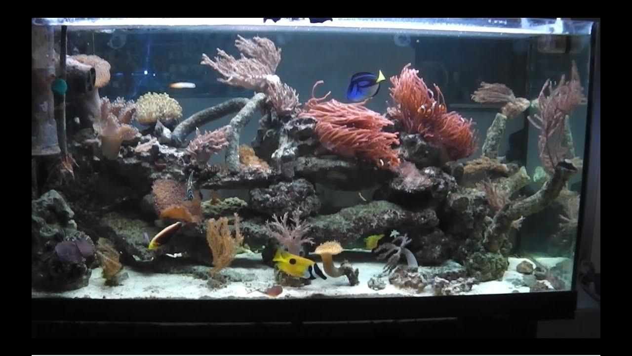 First saltwater tank hd 200l 50 gallons youtube for Aquarium 200l