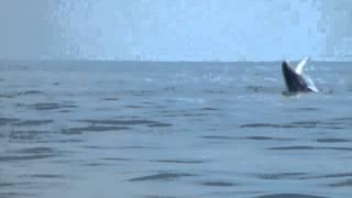 Long Island Sound whale