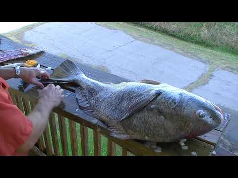 Redneck 101 - How To Fillet Bull Black Drum Quickly