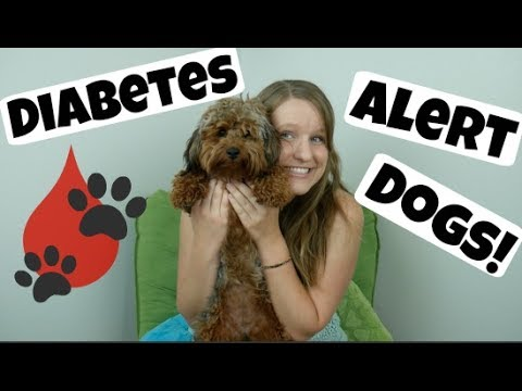 Diabetes Alert Dogs!
