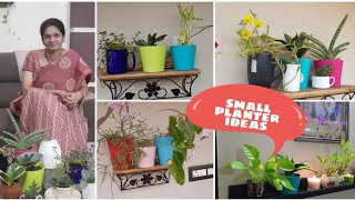 How to grow plants in smallpots,coffee mugs,teapots etc.కాఫీ కప్పులో మొక్కలు పెంచడం ఎలా#smallpots
