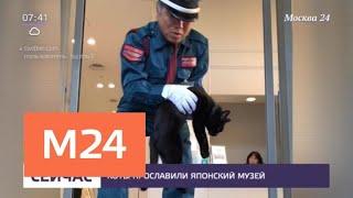 В Японии коты прославили художественный музей - Москва 24