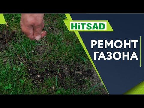 Как убрать проплешины на газоне 🌱 Подсеваем Газон ✔️ Семена газонных трав