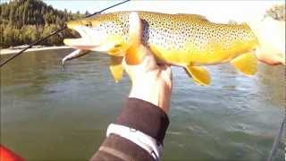 The Bow River Trout Fishing Experience 2012