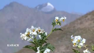 Природа Ромита (Путешествие в Таджикистан)