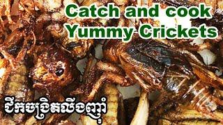 ជីកចង្រិតចៀនញ៉ាំ Catch on cook : tasty coconut crickets