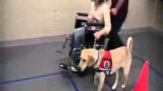 5. Paws Giving Independence- Service Dog- Training Class.flv