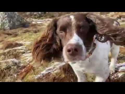 YGlencoe & Canines