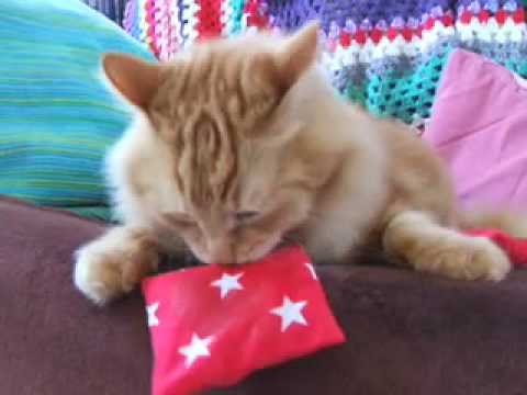 Kitty's Cats Enjoy Organic Catnip Pouches
