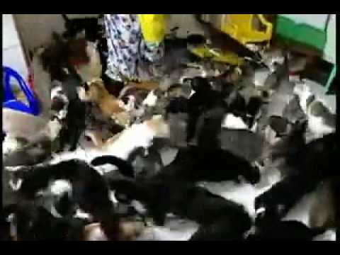 CAT FEEDING FRENZY!!! -MUST SEE-