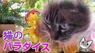 【Jean & Pont 1623】猫のパラダイス計画 とにかくまずは美しく 2019/1/28 #もらった #造花 #ジャン #ポン thumbnail