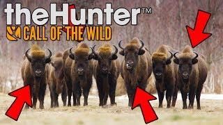 RODZINA ŻUBRÓW NA CELOWNIKU! ŻUBROBÓJSTWO! - theHUNTER: Call of the Wild [PL/HD]
