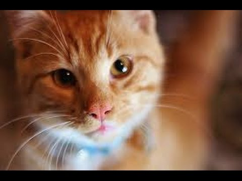 ✶ ✶ ✶10 Toxic Foods  That are Dangerous To cat   ✶ ✶ ✶