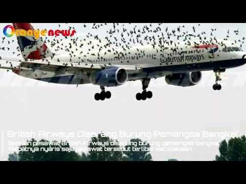 Pesawat British Airways Diserang Ratusan Burung Bangkai