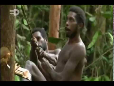 Tribo Korowai -- A vida em uma árvore alta