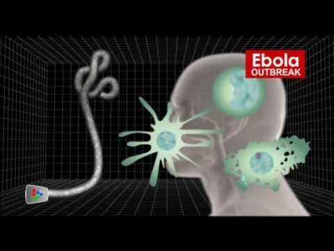 Graphics of how Ebola virus formed and spread