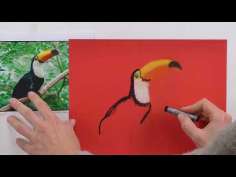 Pastellmalerei lernen: Tucan zeichnen mit Pastellkreide