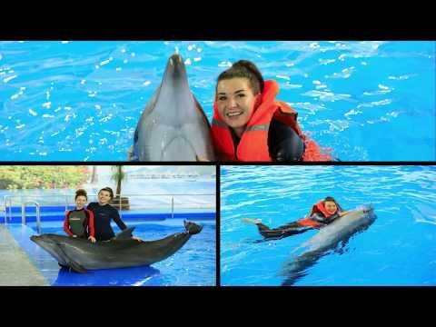 Дельфинарий. Мечта моих 29 лет. Ярославль 2019. Плавание с дельфинами.